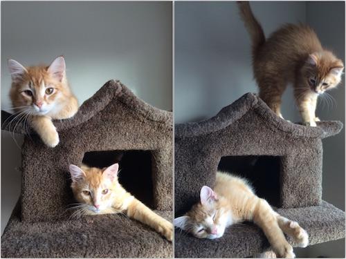 wpid-Kittens-2015-03-31-18-31.jpg